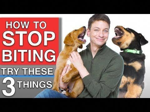 How To Train Your Puppy To Stop Biting You 3 Things That Will