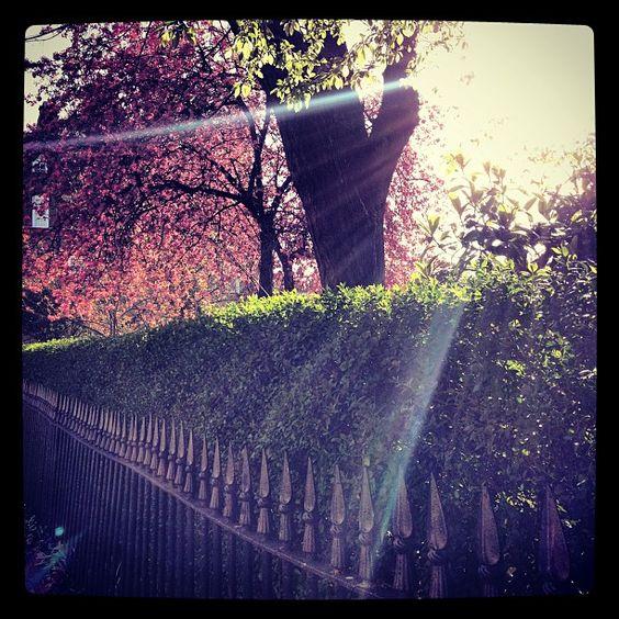 Photon Morning, Lloyd Square WC1