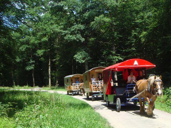 Planwagen Zigeunerwagen Reiten Ferien Zigeunerwagen: Vogesen individuell 8 Tage / 7 Nächte ::...