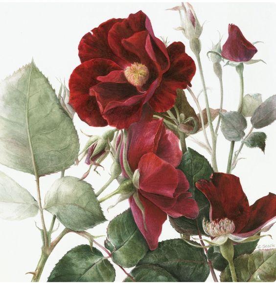 Arte botánico