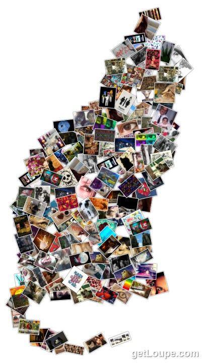 Gafo (gato de fotos