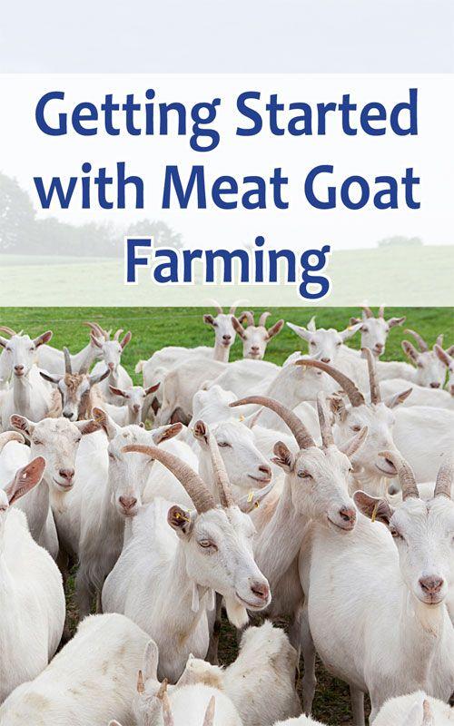 Meat Goat Fa…