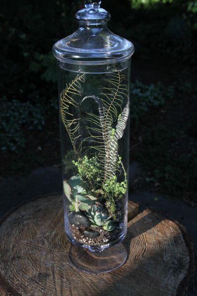 succulent terrarium 3, Françoise Weeks
