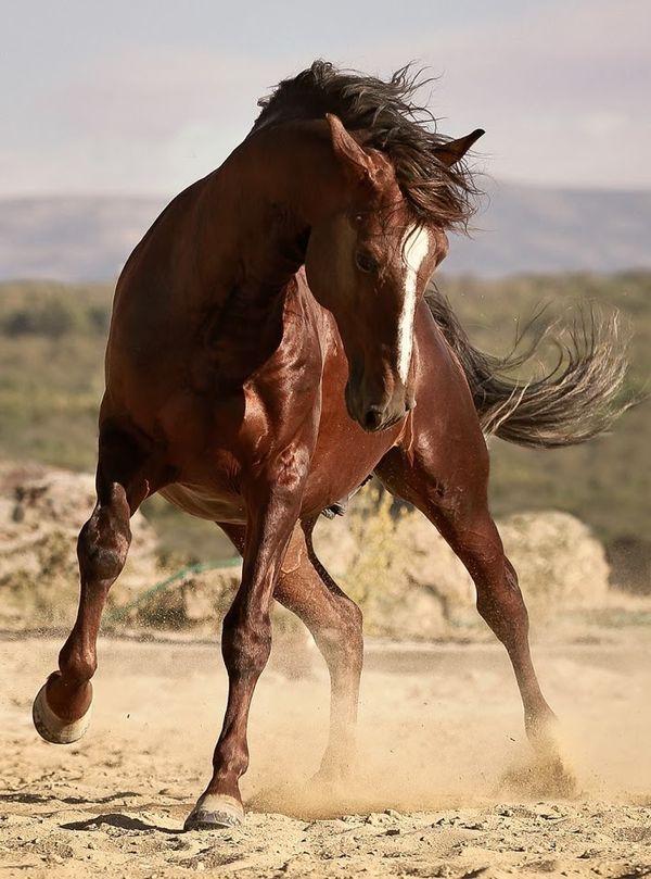 Equini/Cavallo ...: