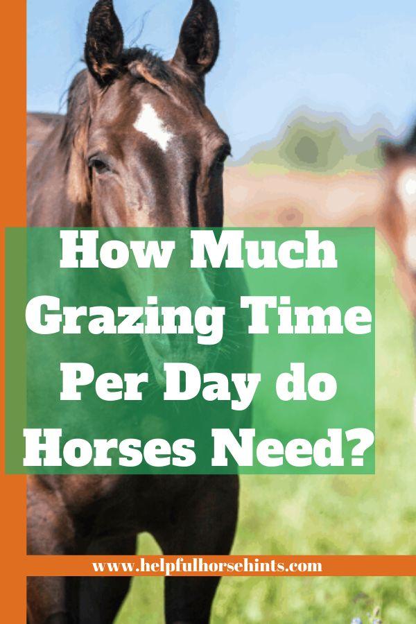 Horses graze…