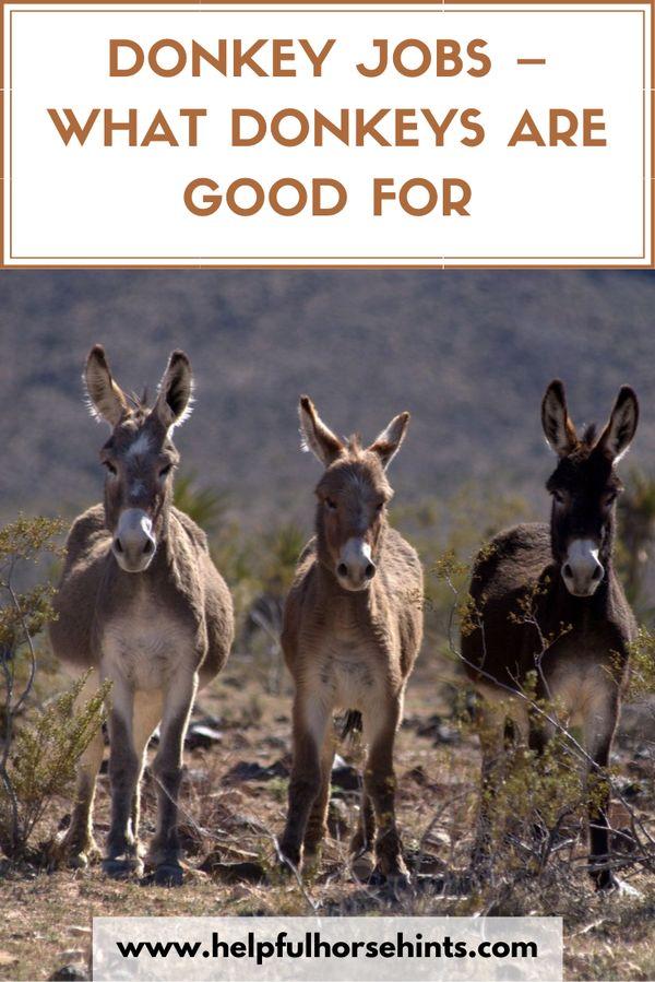 Donkeys beca…