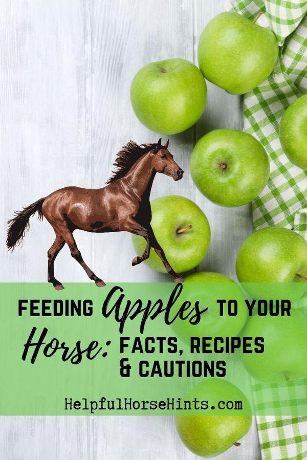 Horses can e…