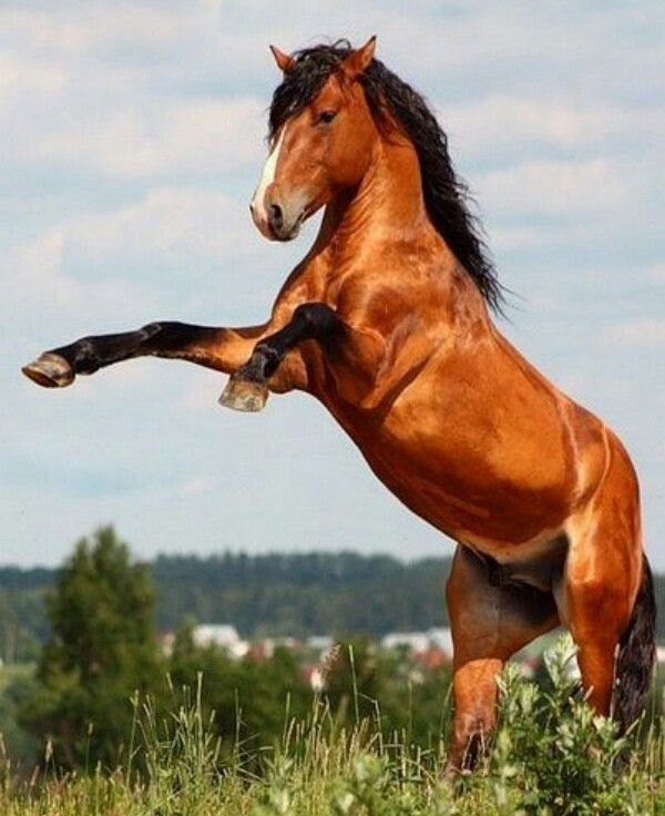 Wow#horse