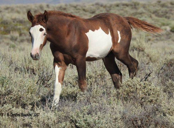 Sand Wash Basin wild foal