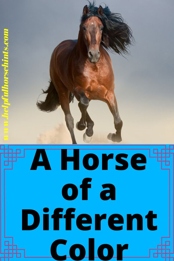 Bay horses a…