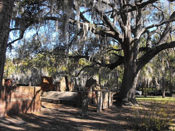 spooky tree in cemet