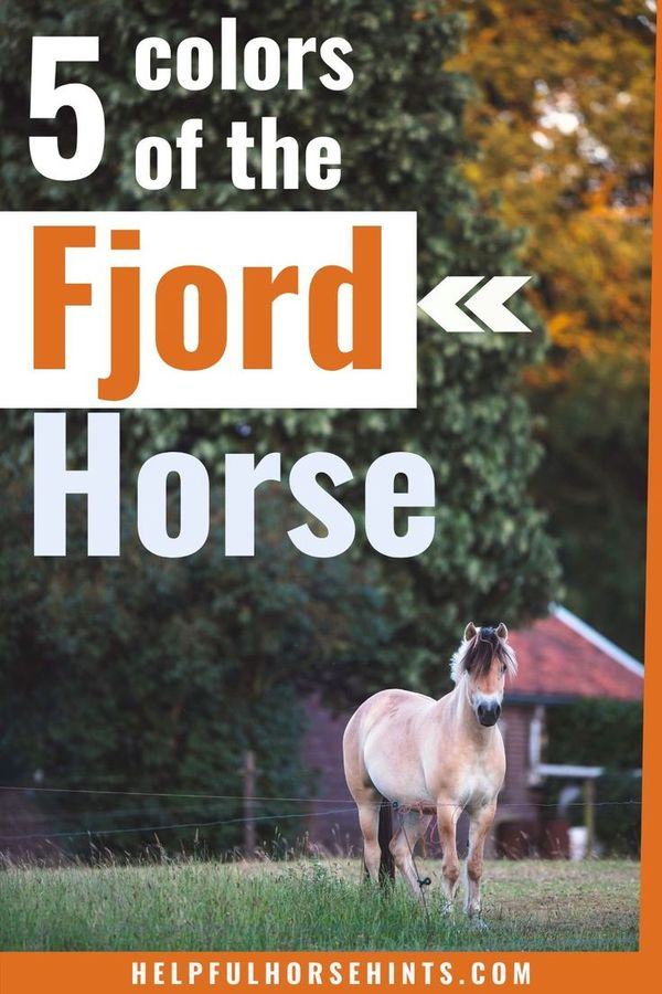 The Fjord ho…
