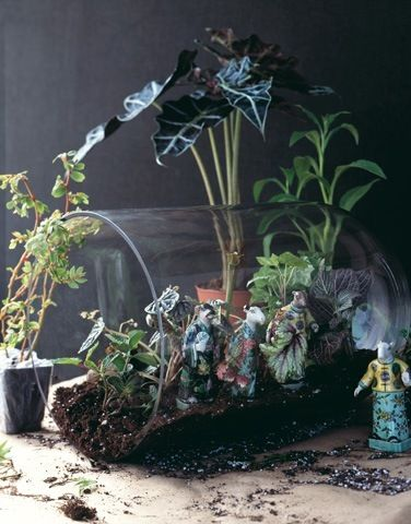 A horizontal terrarium.. Love it!