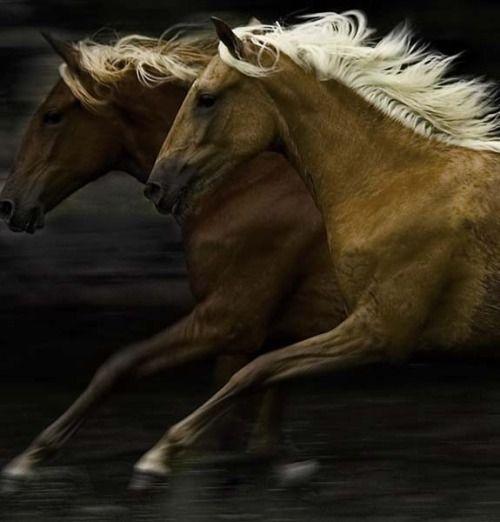 Horses are engines. God, I miss my horse! ~ETS
