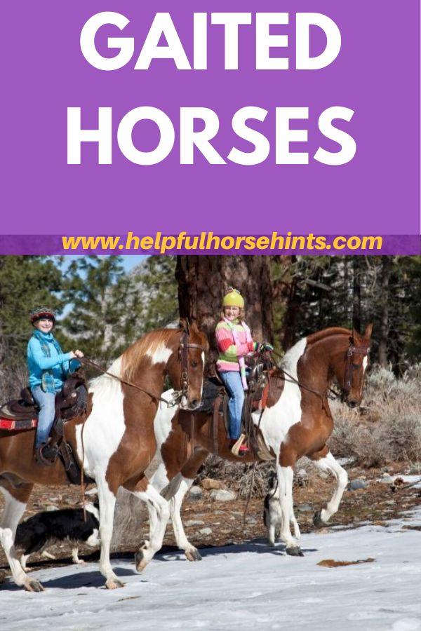 Gaited horse…