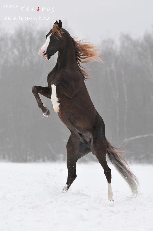 #horses my g…