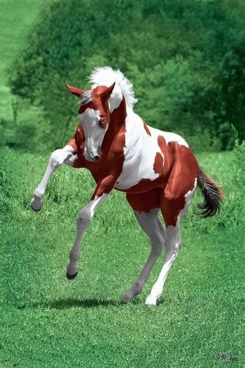 Finicky foal