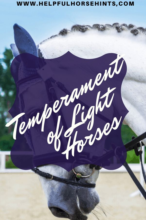 Light horse…