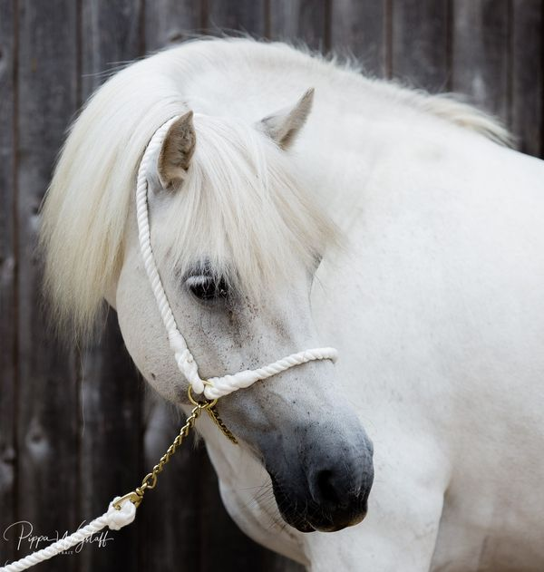 Looking for beautiful equine models in Sussex... —…