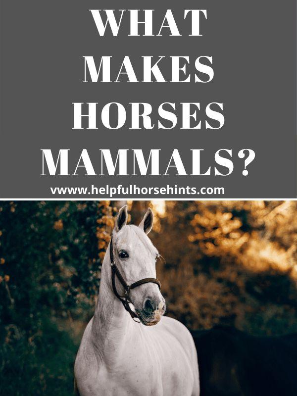 Horses are m…