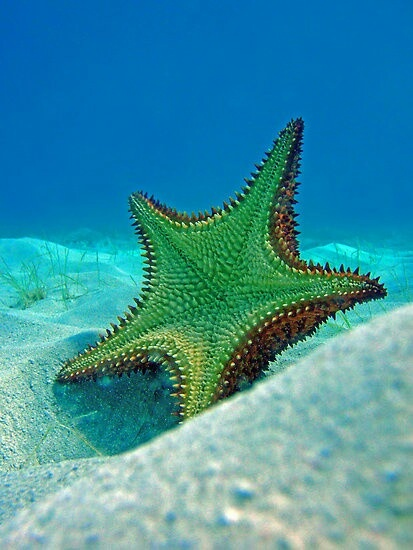 Green starfish
