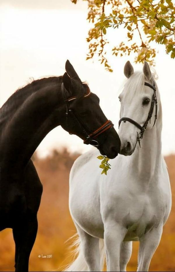 Horse friends look like they are sharing.
