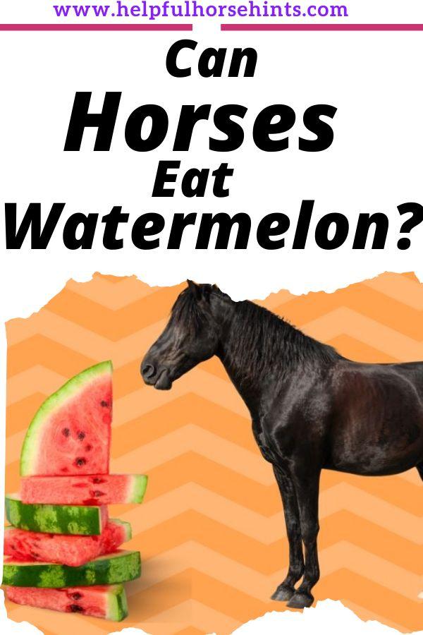 Can horses e…