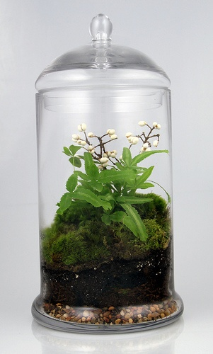 terrarium with tiny flowers