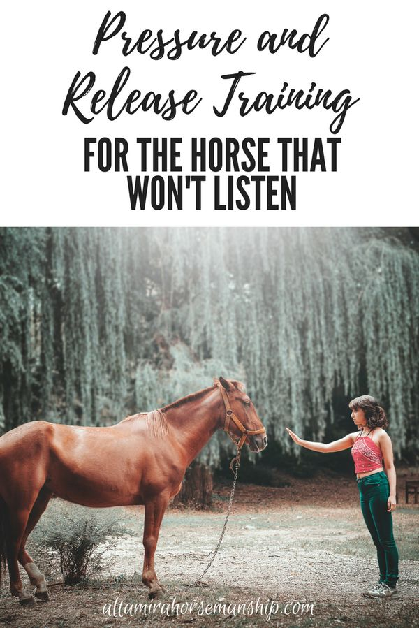 Some of the most difficult horses can benefit from…