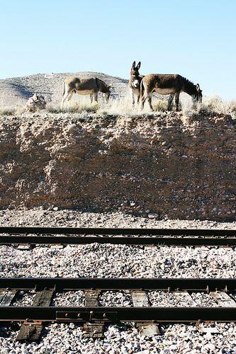 verdecanyonrr.com-burro visitors | Flickr - Photo…