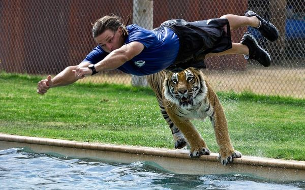 Zookeeper Jeff Harwell dives into a pool closely f…