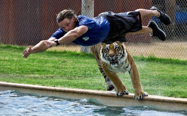 Zookeeper Je…