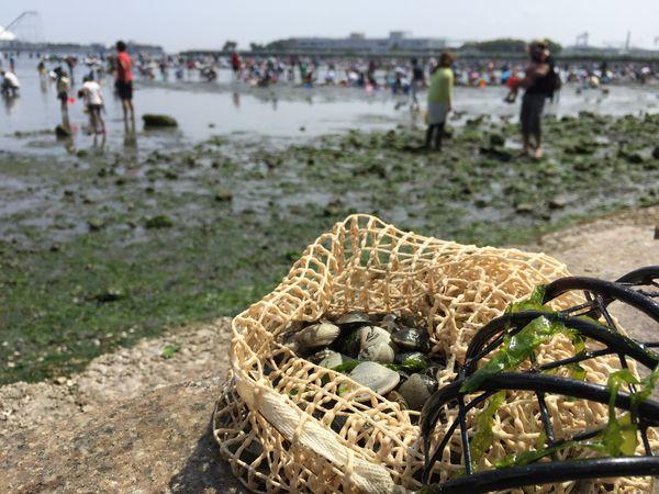 《貝の種類》おいしいのはどれ?知れば潮干狩りの楽しさも倍以上。