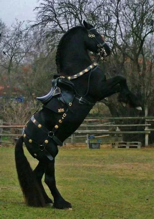 Horses - Friesian stallion named Agelan, in custom…