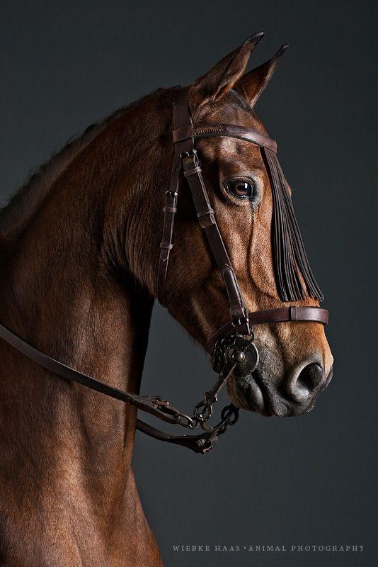 Wiebke Haas - Le cheval prend la pose