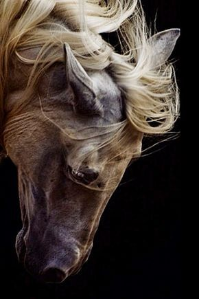 So beautiful! Horse bowed down with flowing mane.