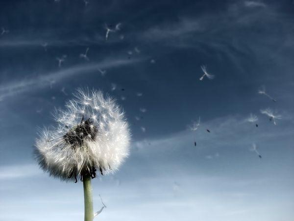 Freedom by Thorsten