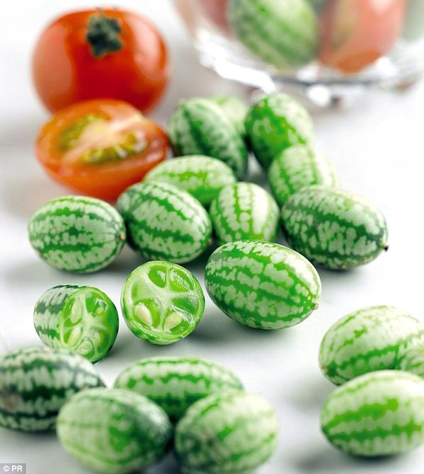 Cucamelon plants and Indigo Rose tomato plants go on sale in 50 Waitrose branches costing ...