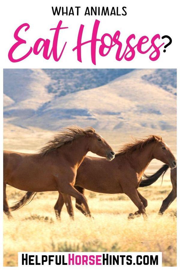 Horses are p…