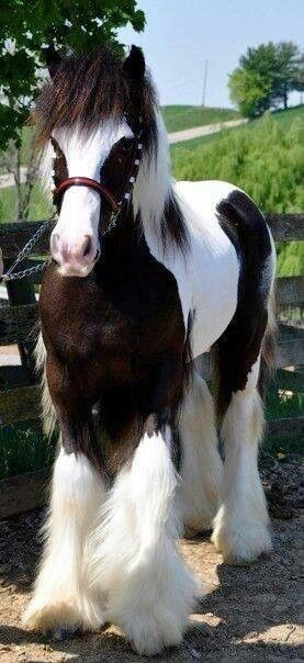 ➗Beautiful Horse