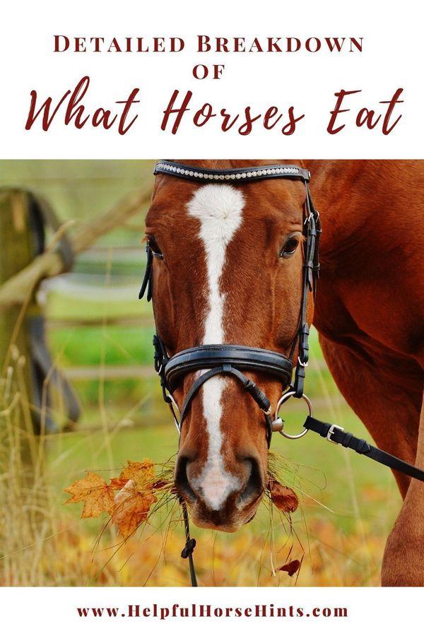 Horses must…