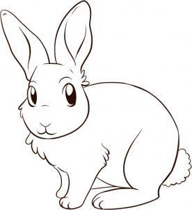 How To Draw A Bunny Rabbit By Dawn Coelhinhos De Desenho Coelho