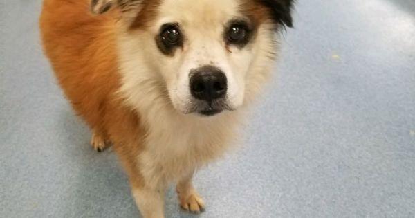 Adopt Demon On Dog Adoption Homeless Pets Help Homeless Pets