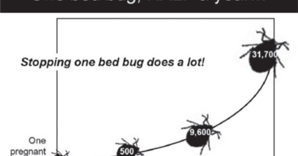 Bed Bug Control Exterminators Removal Bed Bugs Infestation Bed Bugs Bed Bug Control