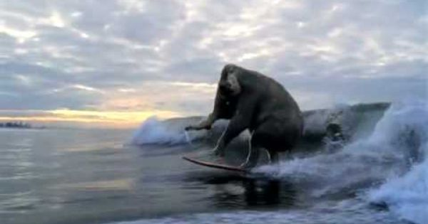 Surfing Elephant Yes Please Surfing Surfing Photography Elephant