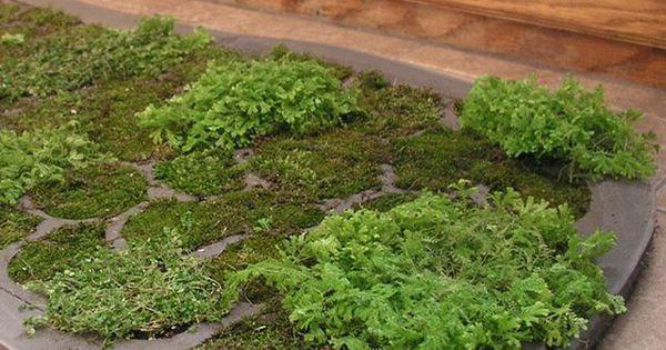 How to make a moss shower mat shower mats natural for Natural moss bath mat