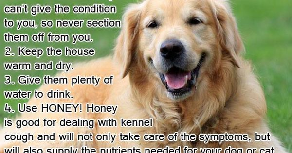 Should I Board My Dog At Kennel With Kennel Cough