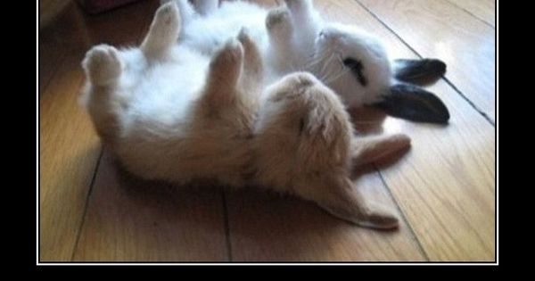 quotes for funny rabbits | Funny Bunnies on Funny Animals