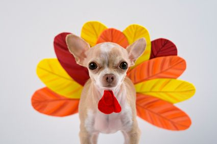 The New Thanksgiving Mascot Dog Thanksgiving Costume Pet Costumes