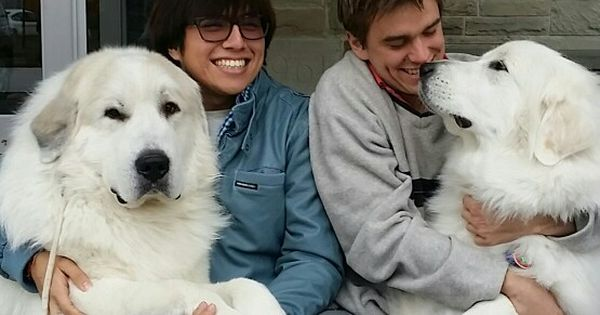 Darlington Great Pyrenees Com Google Susie Wong Pet Therapy For